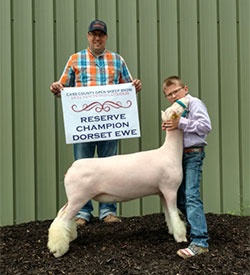 Shuck Show Lambs :: Winners